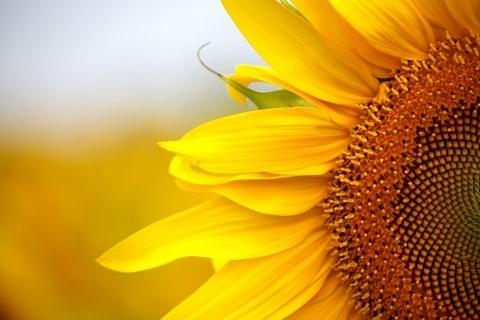 sunflower-house (480x320).jpg