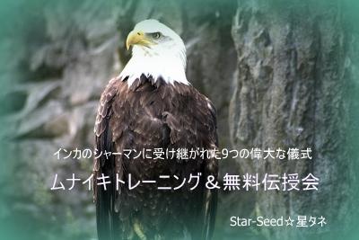 amercian-bald-eagle (400x267).jpg