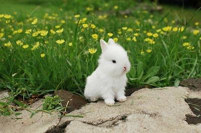 babybunny (400x266).jpg
