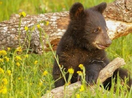 bearspostara.jpg