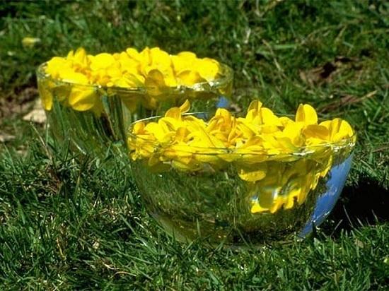 floweressencey.jpg