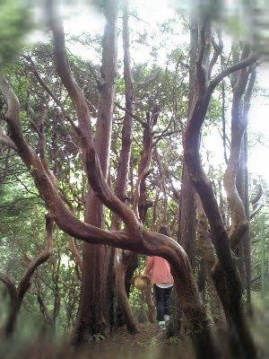 forestseoritsu.jpg