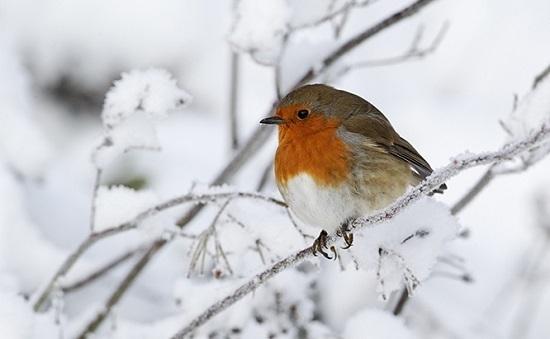 frostbirdyule.jpg