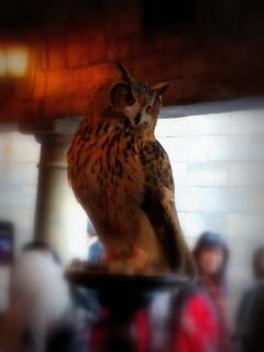 owl22015.jpg