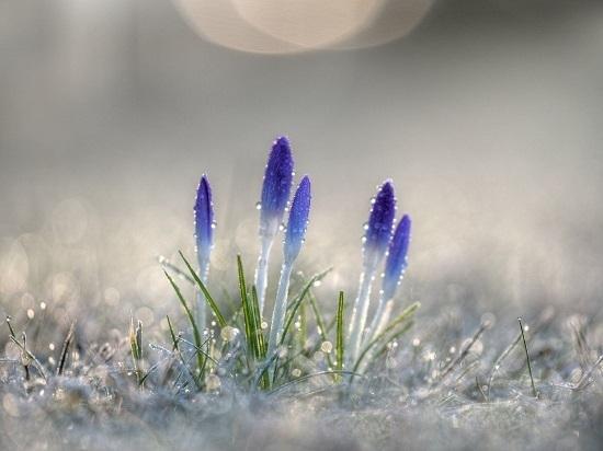 spring-flower.jpg