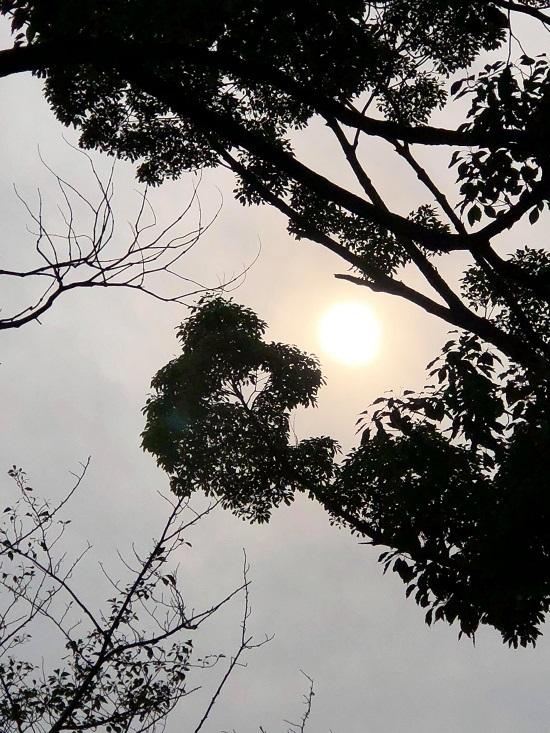 sun-sol syoku.jpg